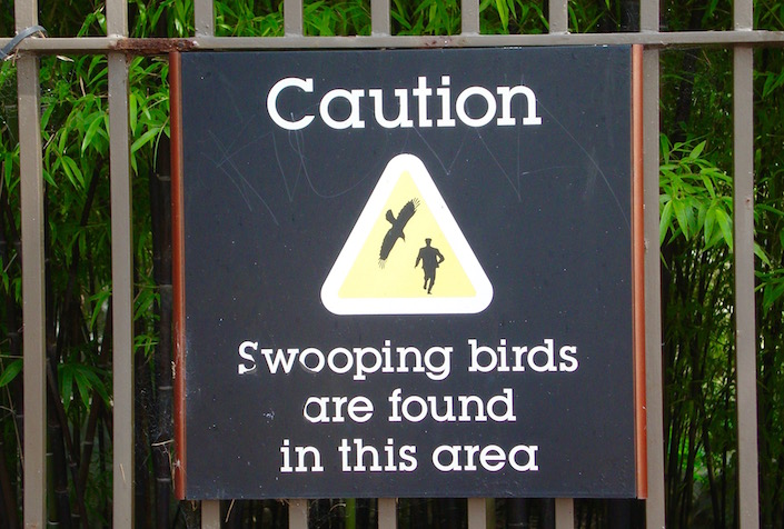 Sign: Caution swooping birds are found in this area
