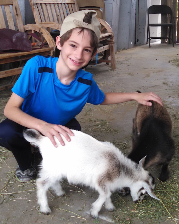 C with baby goats