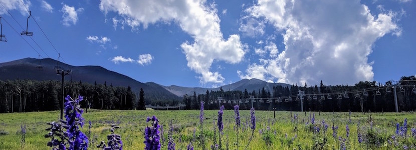 ski resort in summer with purple flowers
