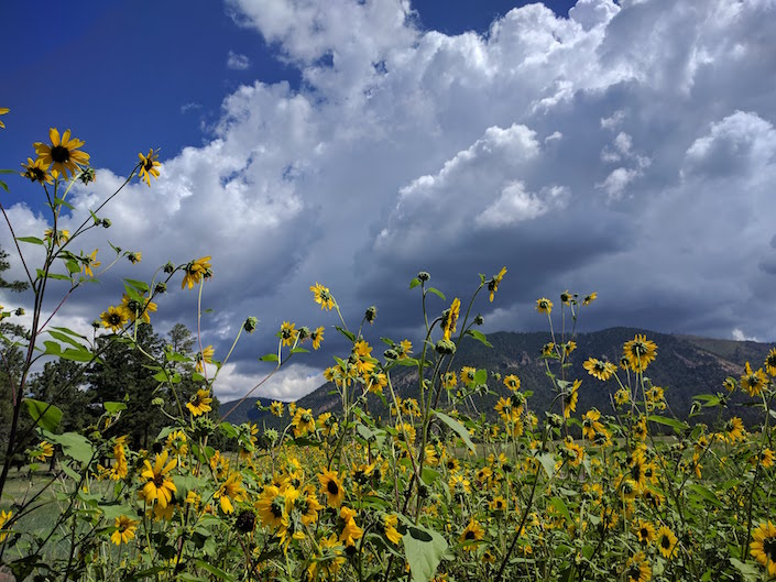 Sunflowers, mountains, and storm clouds